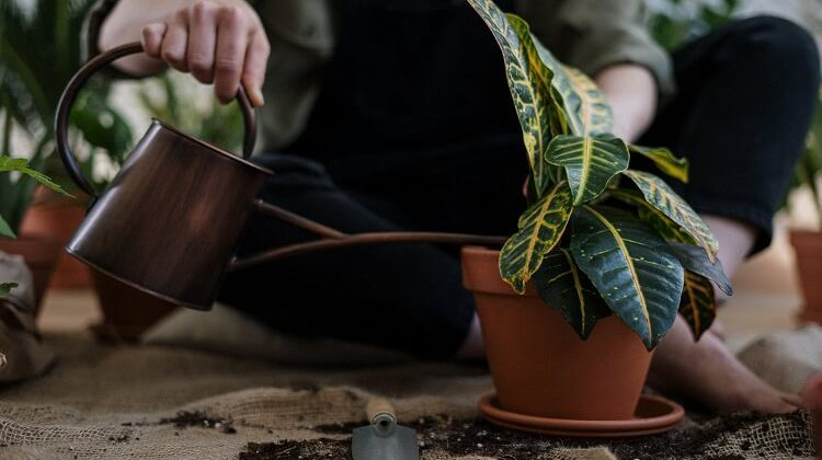 Best Decorative Watering Can Options for Gardeners in 2020